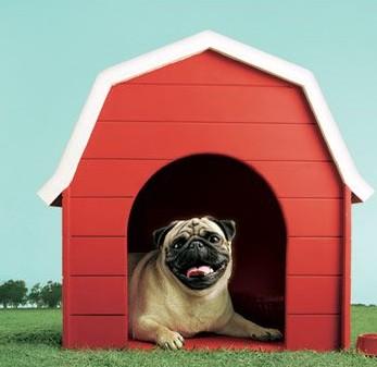 Vodafone-pug